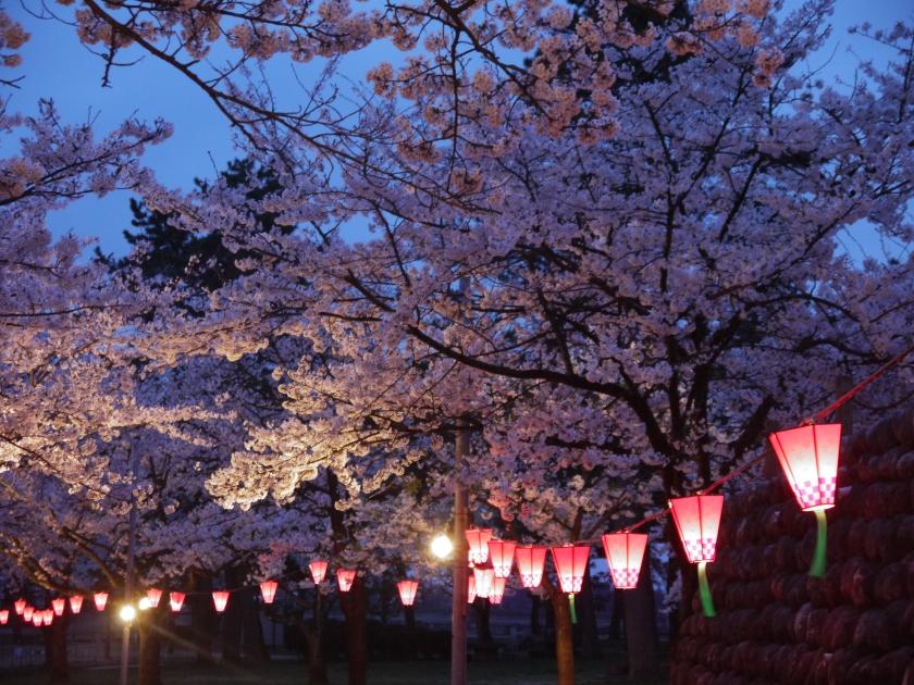 Sakura at night in Namerikawa, Japan.