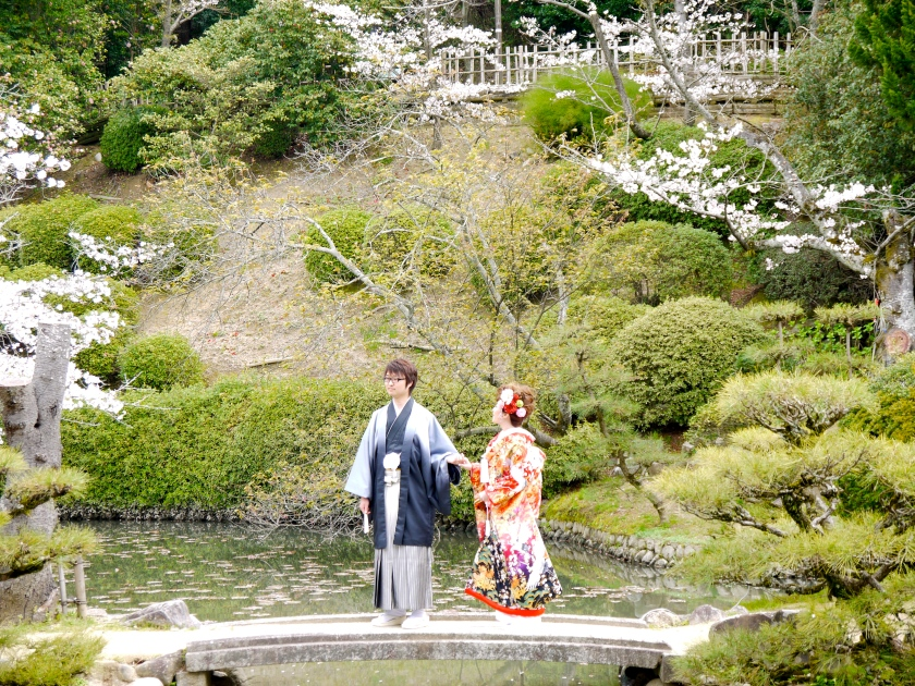 A wedding at Dogo Park in Matsuyama during cherry blossom season.